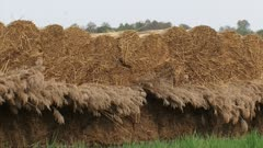 reed stack, reed harvest. Reed cultivation in Weerribben-Wieden National Park,The netherlands