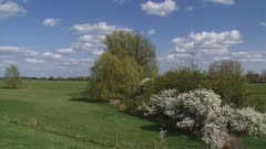 hawthorn  (Prunus spinosa) blooming in typical Dutch river landscape - wide shot