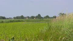 Long strip of water (petgat) overgrown with stratiotes aloides. Dragonflies in flight. Dutch peat landscape in WIEDEN-WEERRIBBEN NATIONAL PARK