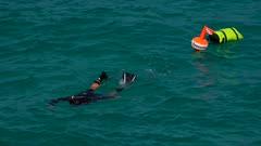 Snorkeller, Cala Molins, Cala San Vicente, Majorca, Balearic Islands, Spain, Mediterranean, Europe