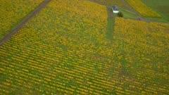 Aerial view of vineyards in autumn, Wiltingen, Saar Valley, Rhineland-Palatinate, Germany, Europe