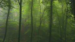 Flight through a foggy beechwood forest, Kirf, Rhineland-Palatinate, Germany, Europe