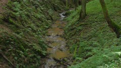 Little brook in a forest, Rhineland-Palatinate, Germany, Europe