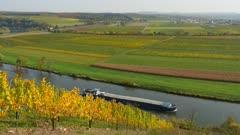 Vineyards in Upper Moselle Valley near Palzem, Rhineland-Palatinate, Germany, Europe