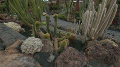 Jardin de Cactus (Cactus Garden) in Guatiza, Lanzarote, Canary Islands, Spain, Atlantic, Europe