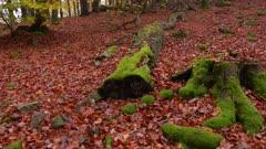 Dead wood in autumnal forest, Freudenburg, Rhineland-Palatinate, Germany, Europe