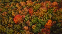 Aerial view of an autumn forest, Mannebach, Rhineland-Palatinate, Germany, Europe
