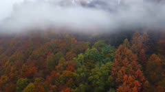 Aerial view of a foggy forest in autumn, Kastel-Staadt, Saar Valley, Rhineland-Palatinate, Germany, Europe
