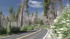 View of fire stricken trees and road, Yosemite National Park, UNESCO World Heritage Site, California, United States of America, North America