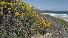 Beach and Pacific Ocean, Monterey Peninsula, California, United States of America, North America