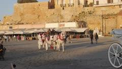 White Horse enjoys sun in Venetian Harbour, Chania, Crete, Greek Islands, Greece, Europe
