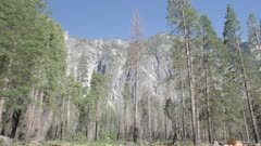 Travelling shot through Yosemite Valley, Yosemite National Park, UNESCO World Heritage Site, California, USA, North America