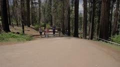 Tourists walking down the Big Oak Flat road at Tuolumne Grove, Yosemite Valley, UNESCO World Heritage Site, California