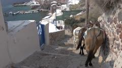 Donkeys on steps above harbor in Oia, Santorini, Greece, Europe