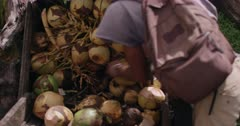 Local street vendor chopping up coconut, Annandale Falls, Grenada, West Indies, Caribbean, Central America