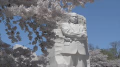 Cherry blossom trees around Martin Luther King Jr. Memorial, Washington DC, United States of America, North America