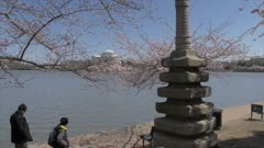 Cherry blossom trees, Japanese Pagoda and Thomas Jefferson Memorial, Washington DC, United States of America, North America