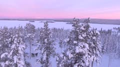 View by drone of snow covered trees and forest in winter at sunset, Akaslompolo, Finnish Lapland, Finland, Europe