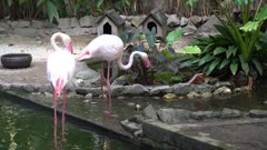Cranes drink water and clean the feather in bird park.