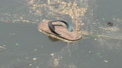 A slipper is flow at the river. Pollution concept.