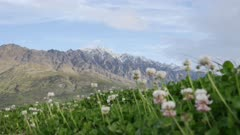 Mount Remarkable, Queenstown, New Zealand with white clover as foreground in sunny bright day.