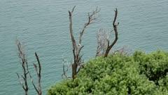 Dry wooden tree near the sea.