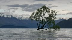 Famous Wanaka Tree in after sunrise.