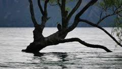 Bird on lonely Wanaka Tree, South Island