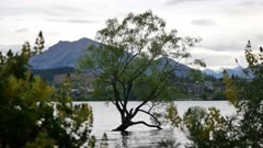 The lonely tree in Wanaka, New Zealand
