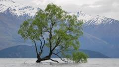 Wanaka Tree, New Zealand in morning.