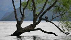 A bird rest at Wanaka  tree in morning