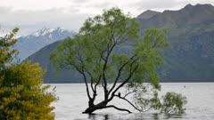 Famous Wanaka tree in South Island, New Zealand.