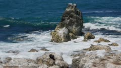 Fur seal and strong wave hit the rock formation at Kaikoura, South Island, New Zealand in morning.