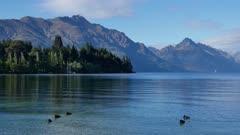 Mallard ducks swim in Lake Wakatipu.