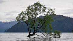 Wanaka Tree, New Zealand.