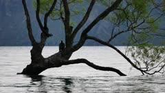 Two birds rest on Wanaka tree.