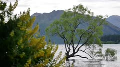 Wanaka tree with lupin