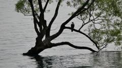 Bird have a break at Wanaka  tree.