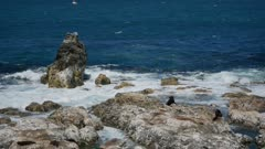 Fur seal rest at the rock at Kaikoura Beach, South Island