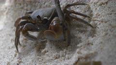 crab anse takamaka gimbal beach seychelles