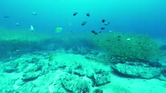 bengal snapper shoal bon vallon seychelles