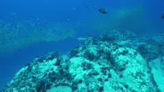 eagle ray Seychelles