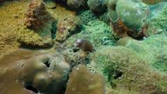 moray eel Seychelles