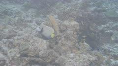coral head with fish Kuredu Maldives ungraded BT.2020 flat
