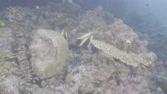 phantom banner fish Kuredu Maldives ungraded BT.2020 flat