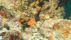coral hind Ellhaidhoo Maldives