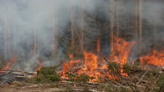 Strong Fire in the Summer Forest