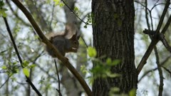 squirrel  sits on a tree branch