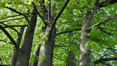 Trees with fresh leaves in the spring forest