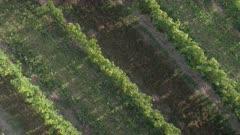 Vineyards Rising Aerial